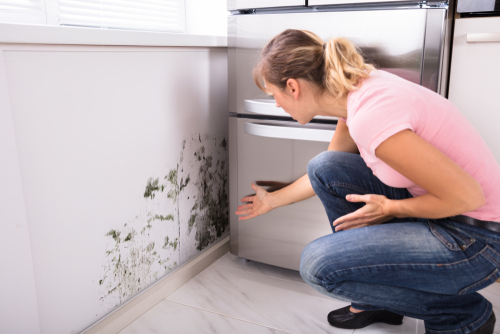 Stop mould in your home